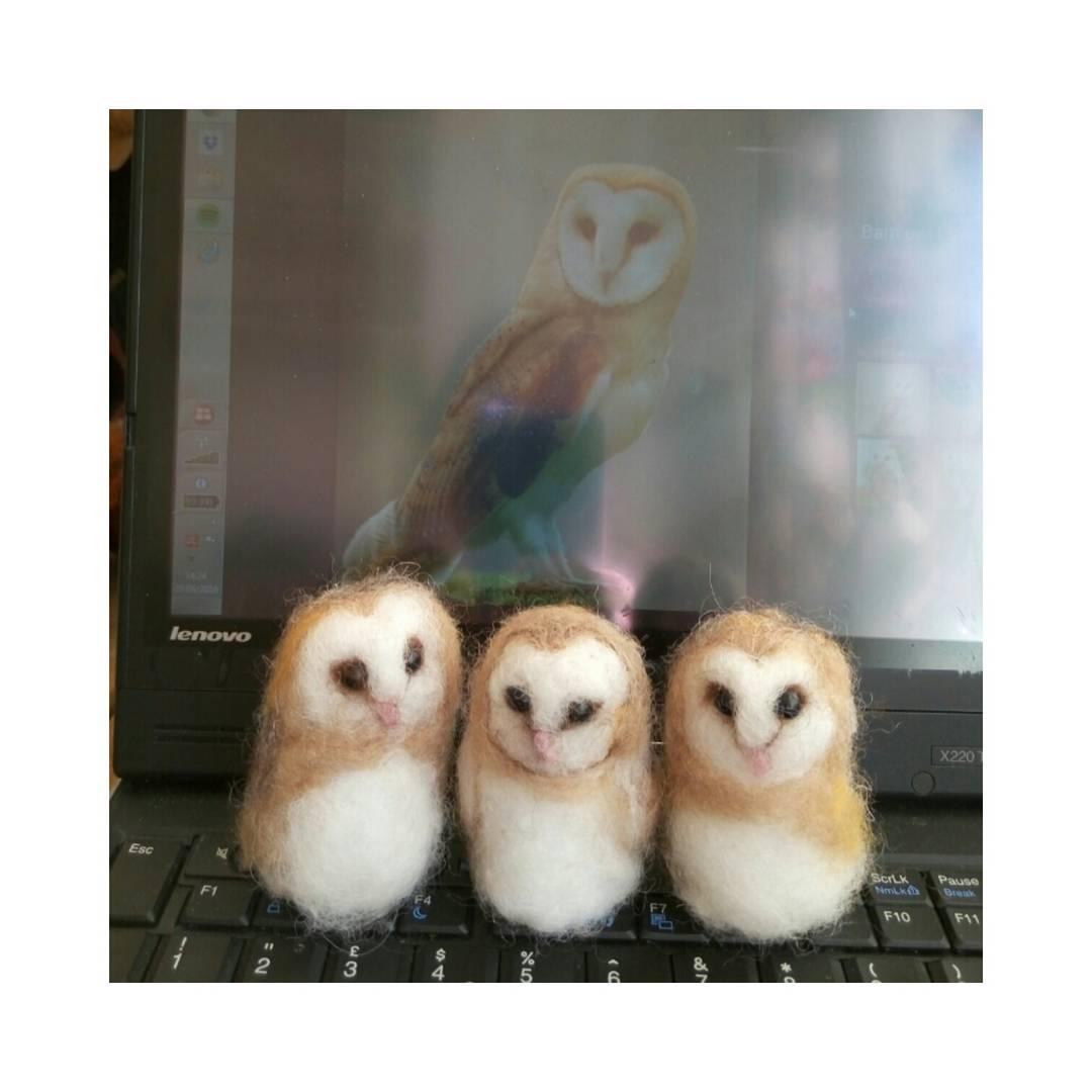 barn owl #owl