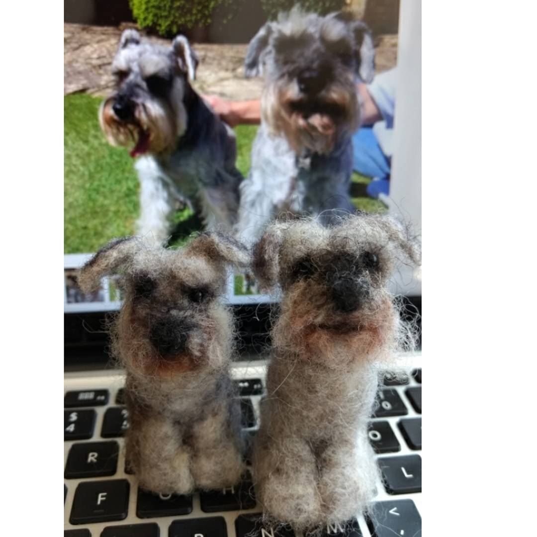 "Monty and Brewster: ""I think you're a genius!!! They're amazing Carol, thank you so, so much!"" Caroline #schnauzer #dogs"