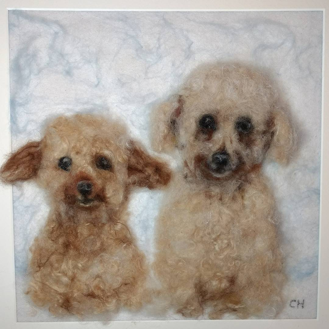 "Elderly, adorable ex rescue poodles: ""Carol has captured Honest and Bertie to perfection: eyes, ears, tilt of the head and expressions are totally right; we are thrilled with the picture ."" Roger and Alison #3d #needlefelting #dogs #poodle #puppies #wool"