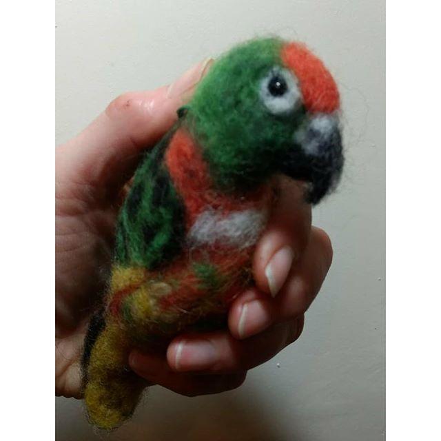 """Charlie the Jardine Parrot: """"Excellent job"""" Simon  #jardineparrot #felt #needlefelt #parrot #pet"""